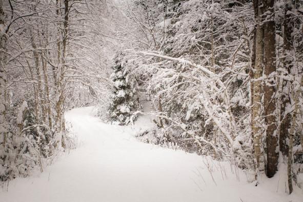 1. desember: Ein litt forseinka julekalendar