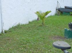 Forte De Copacabana 2004 011