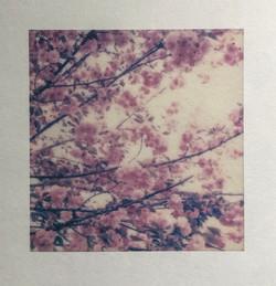 Spring Virus Blossoms, Rosemary Fallon