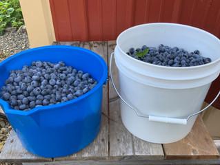 Recipe for Blueberry Bliss!