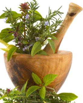 Les plantes toute une histoire