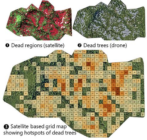 Dead trees france_drone vs. sat.png
