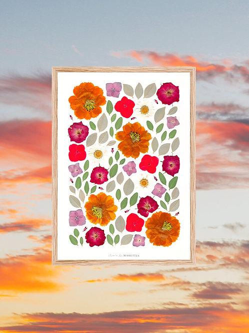 cadre herbier orange fleur de cosmos