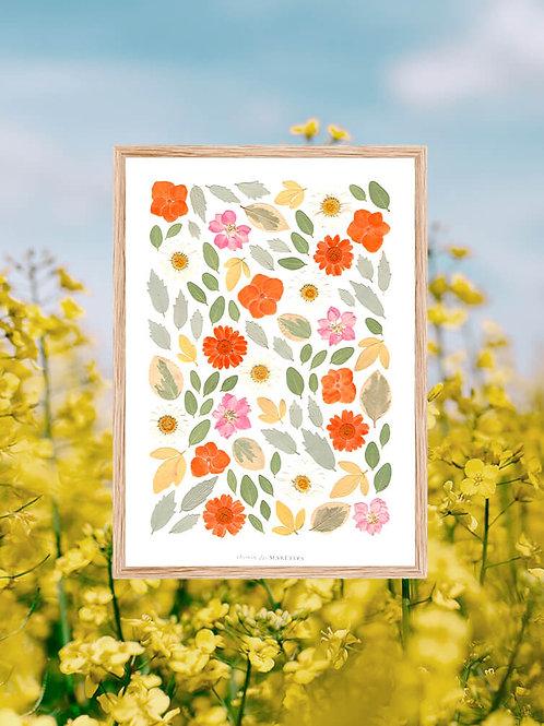 herbier chemin des marettes hortensia et marguerites