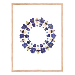 Herbier Fleur bleue