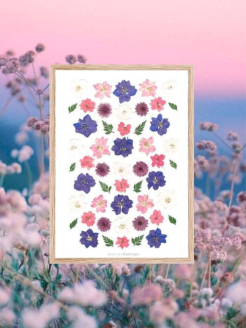 herbier de fleurs bleues et roses