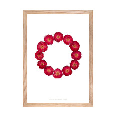 herbier-roses-rouges-cadre-bois.jpg