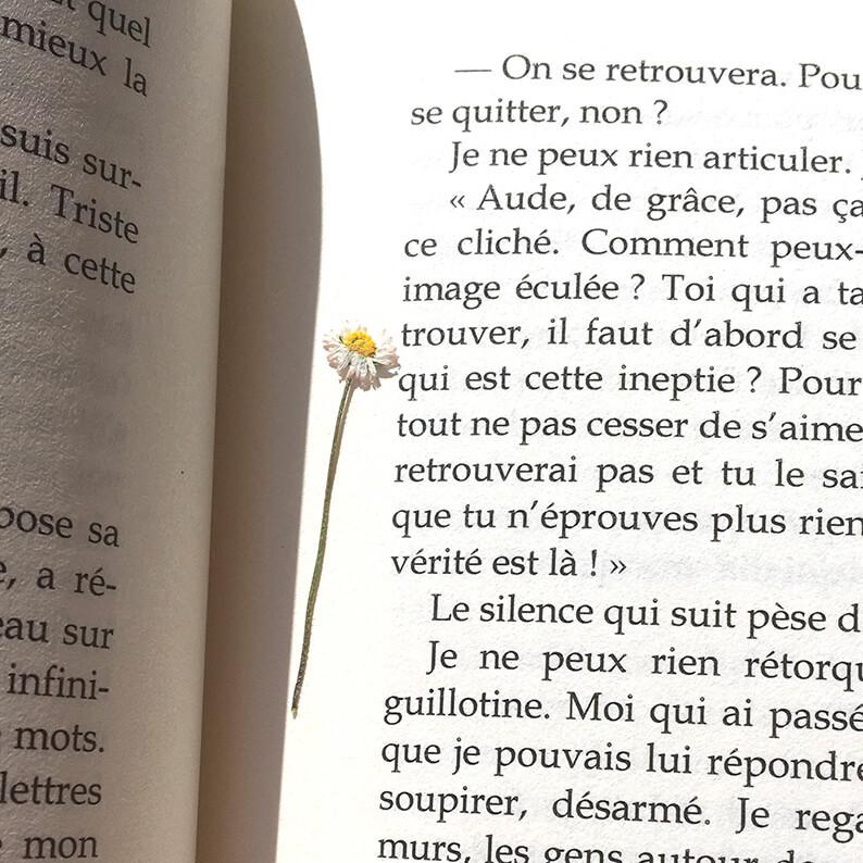 pâquerette séchée dans un livre