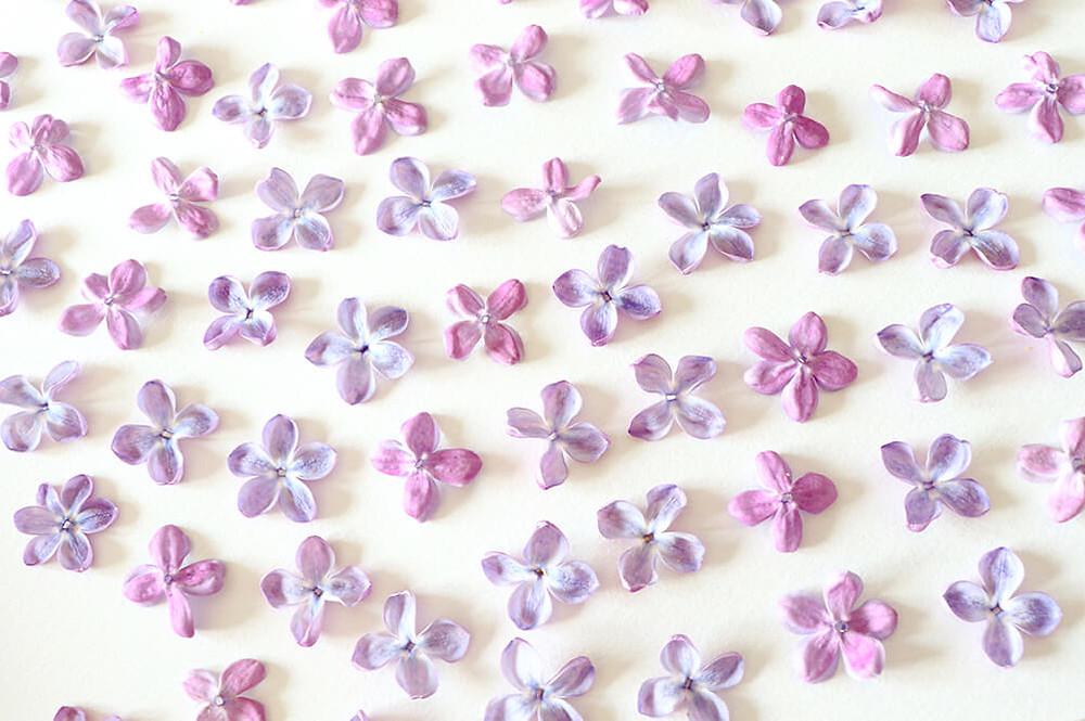 technique des fleurs pressees - lilas