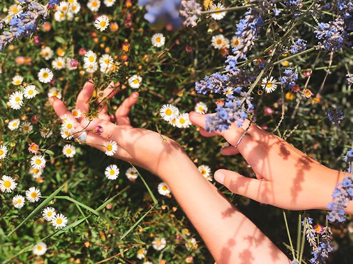 herbier- quel est le meilleur moment pour cueillir les fleurs
