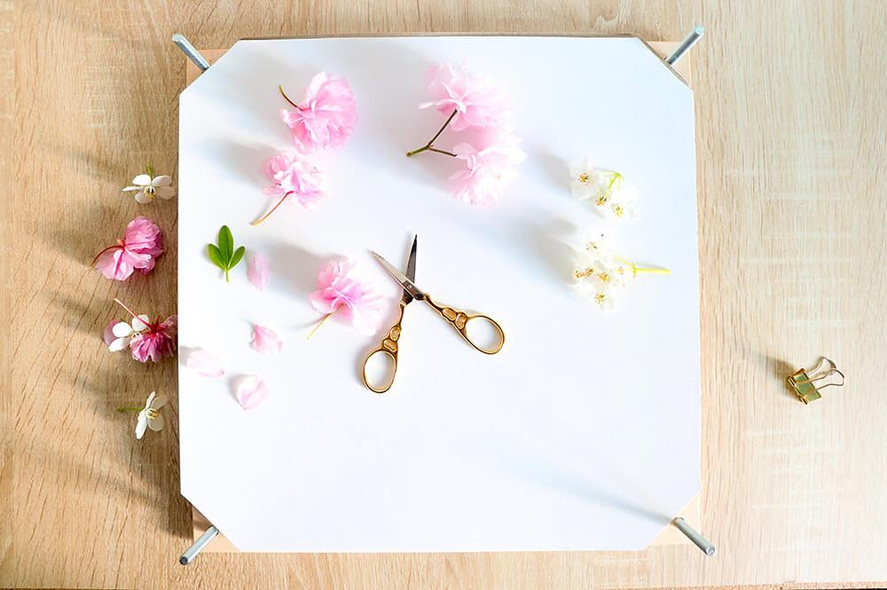 tutor fleurs pressees