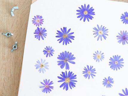 Comment presser des fleurs et faire un herbier.