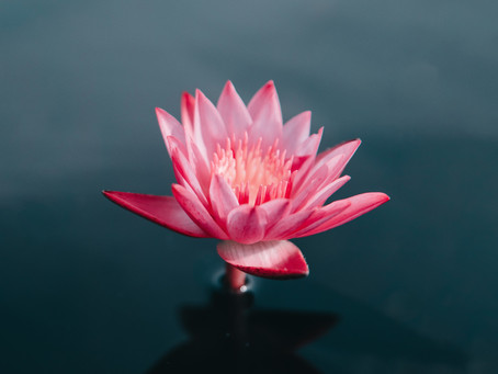 Free Class: Foundations to Meditation