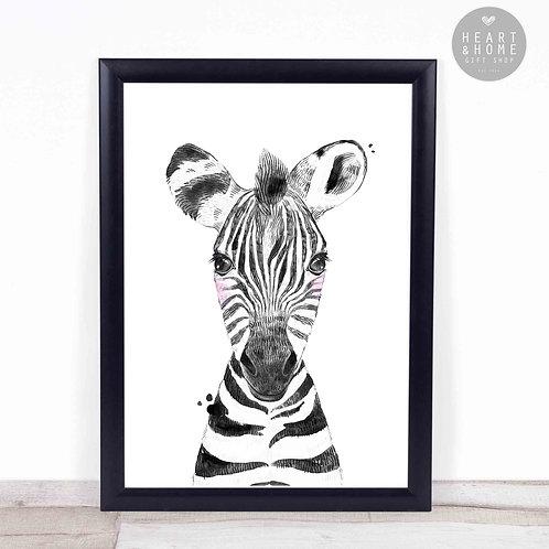 """Baby Zebra (16""""x12"""" Picture)"""