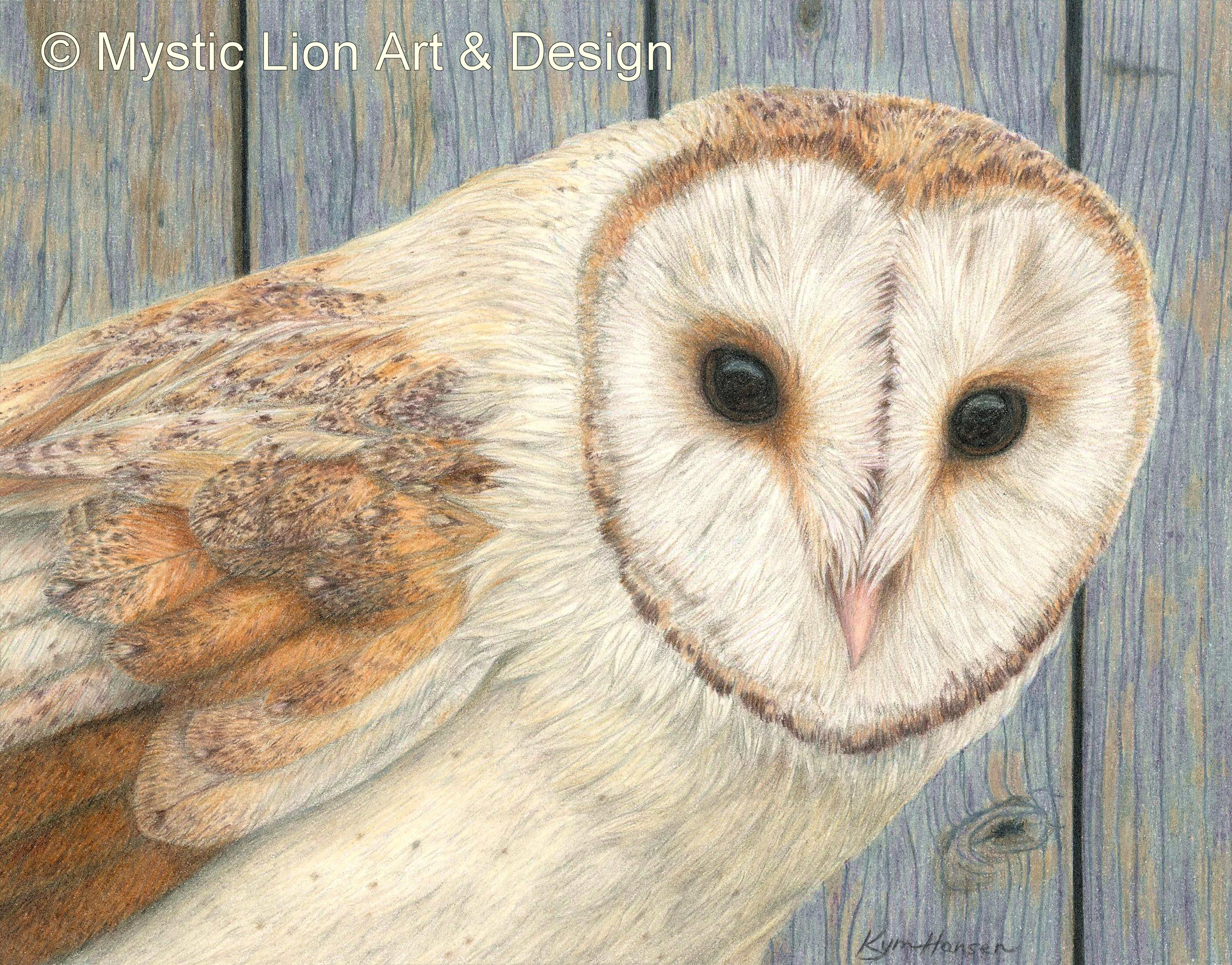 Being a Barn Owl