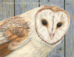 Being a Barn Owl