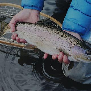Fishing Activity-01.jpg