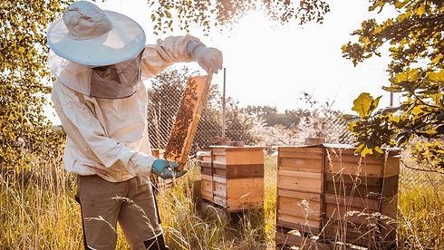 пчеловод.jpg