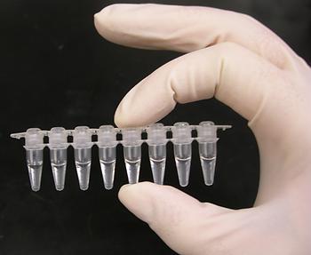 PCR_tubes-768x630.png