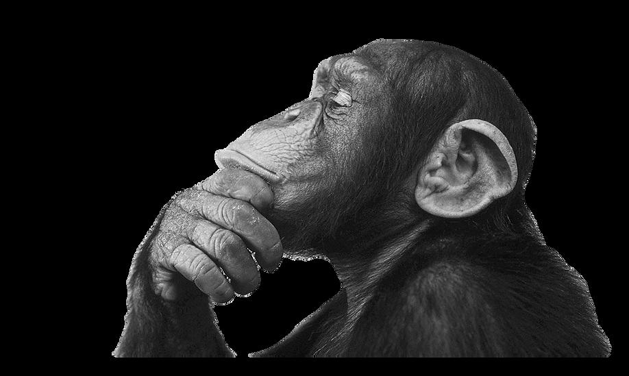 monkey-think.png
