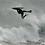 Thumbnail: Bodyboard - Supreme, Pro PE