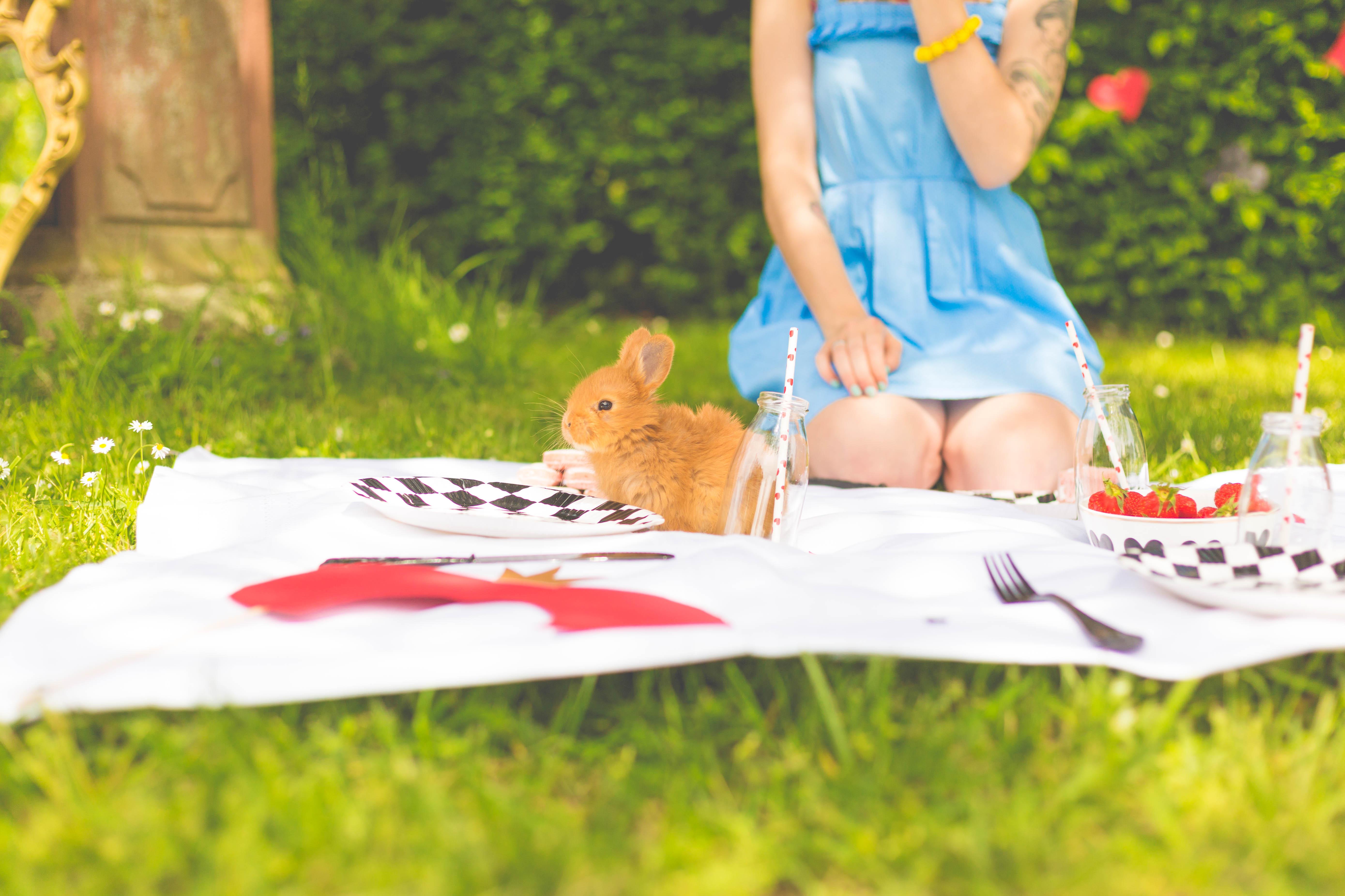 Alice champêtre parc