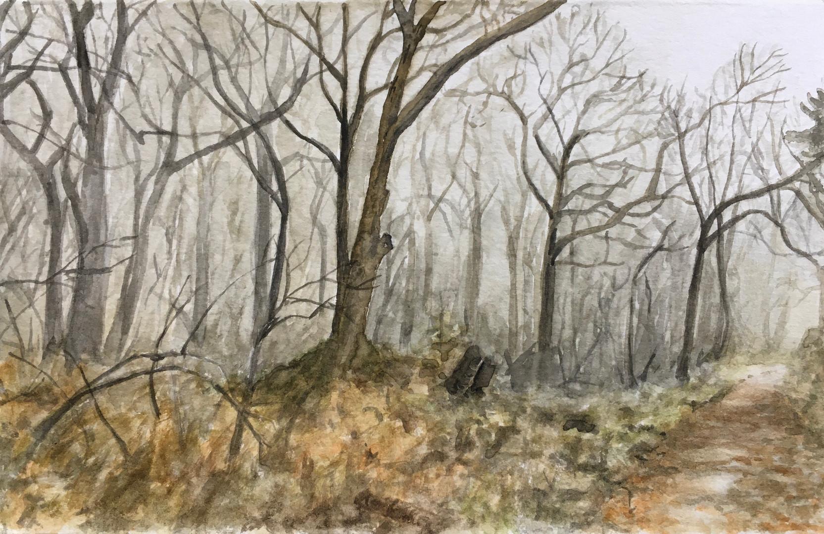 Coleman Senecal. Winter Woods..JPG