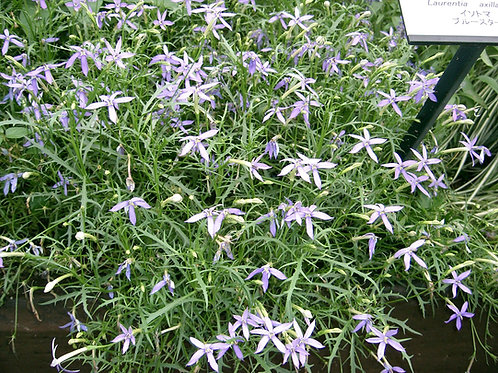 """Isotoma 3.5"""" Container - $3.99"""
