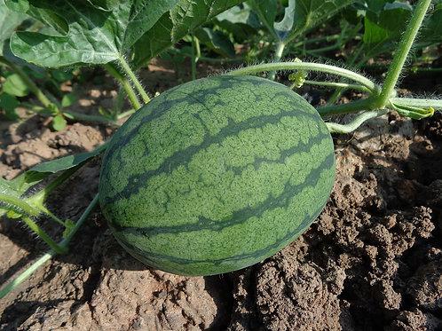 "Watermelon 3.5""/$3.99"