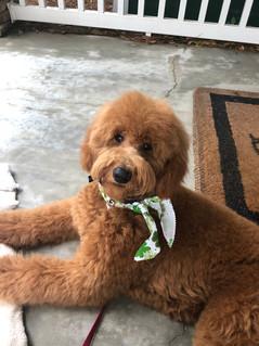 Gussie - 7  months