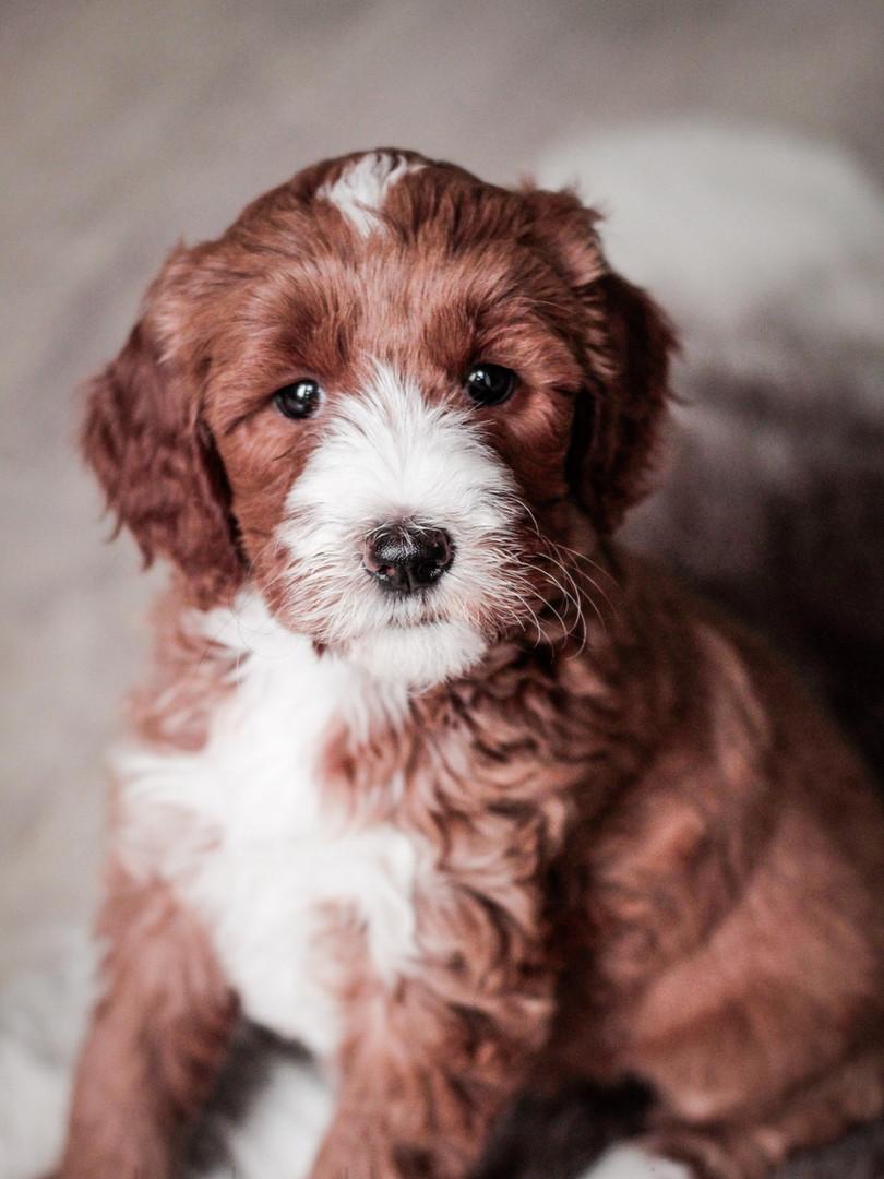 Piper - 7 weeks