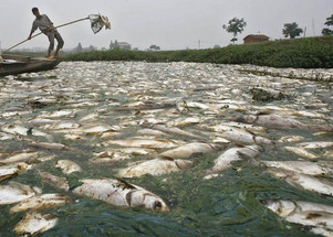 80% of the Ocean's fish will die in 20 years,many people will starve due to famine, Scientist&#3