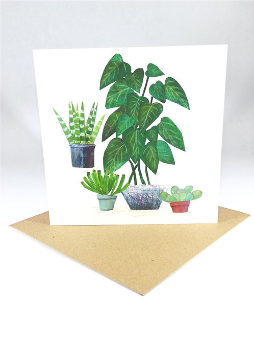 Succulent Plants no.5 Greetings Card