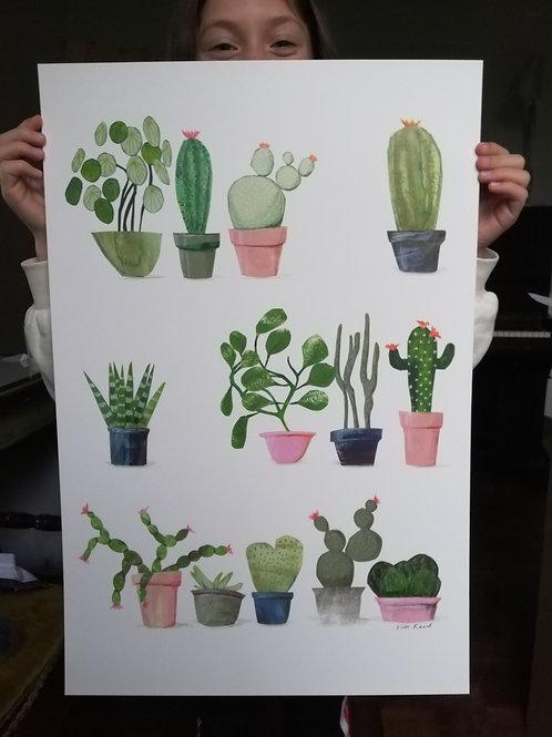 Succulents Signed Print A2