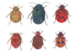 Red Bugs