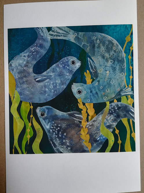 Grey Seals Signed Print