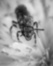 animal-ant-black-1101198_edited.jpg