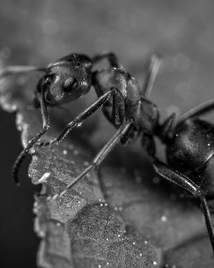 ant-bug-insect-1104974_edited_edited.jpg