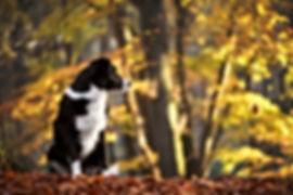 Hundefotografie und Tierfotografie im Kreis Viersen Sandra Kuschel Niederkrüchten, buchbar deutschlandweit