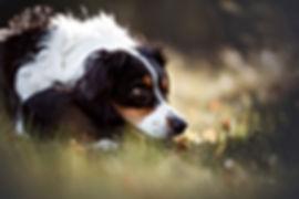 Lieblingstier-Fotografie.de Sandra Kuschel eindrucksvolle Hundefotografie in NRW