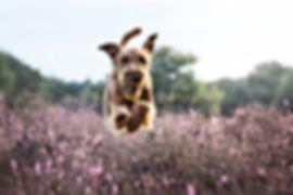 Momente für die Ewigkeit, Hundefotografie in Niederkrüchten, Kreis Viersen, Mönchengladbach, Roermond
