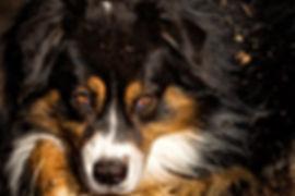 Eindrucksvolle Hundefotografie und Tierfotografie deutschlandweit