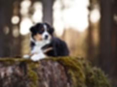 Hundefotografie in Niederkrüchten und Umgebung Sandra Kuschel Kreis Viersen, Nordrhein-Westfalen