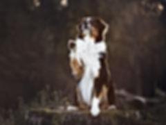 Eindrucksvolle Hundefotografie und Tierfotografie in Nordrhein-Westfalen