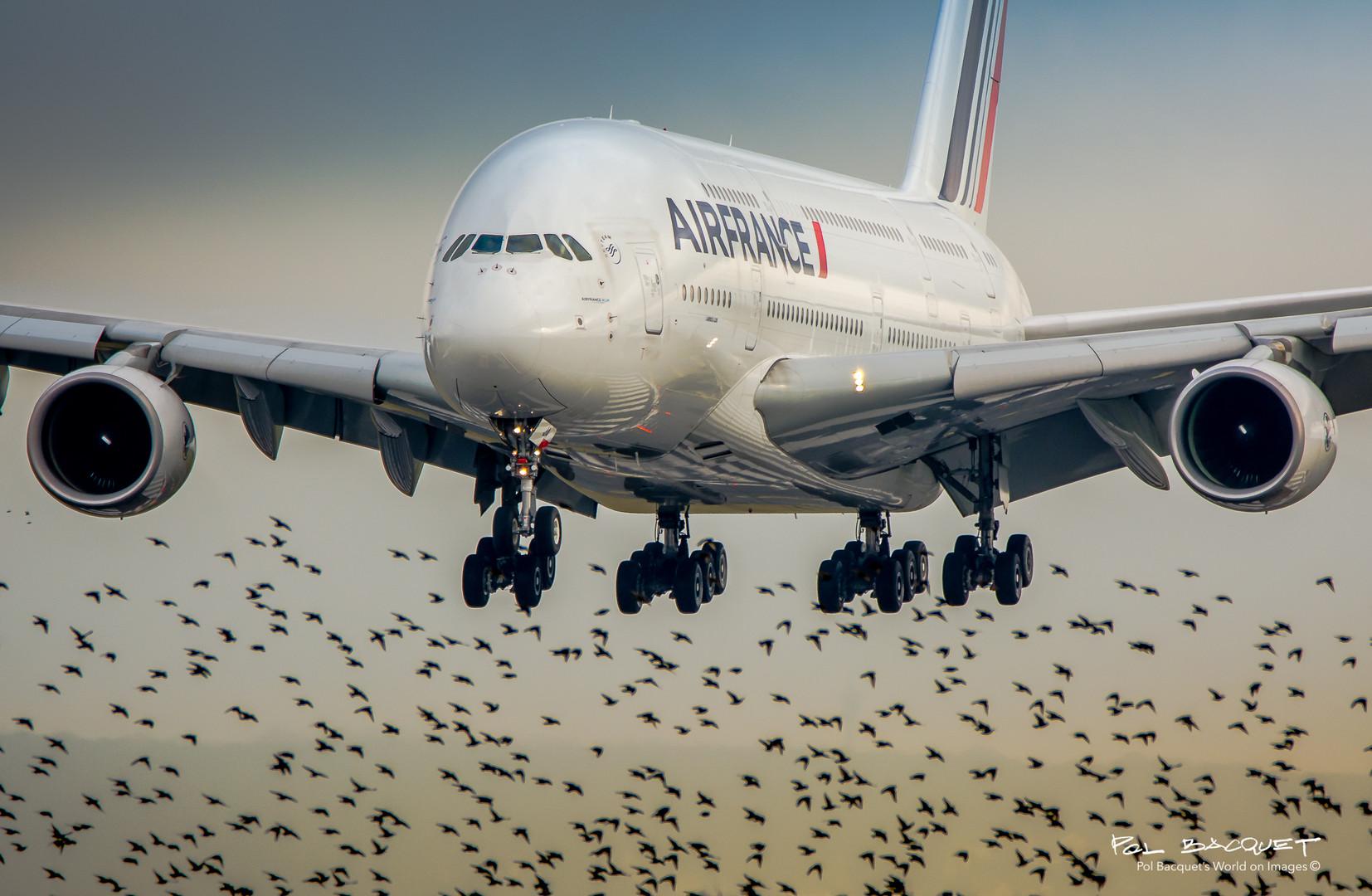 Airbus A 380, POL BACQUET