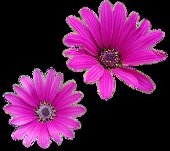 פרחים סגולים.png