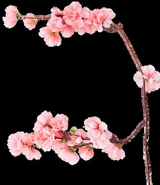 פרחים.png
