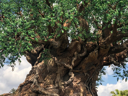 Attractions with the best views at Disney's Animal Kingdom®