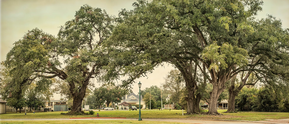 mt-carmel-oaks-pano.jpg
