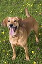 mutt-mixed-breed-dog.jpg